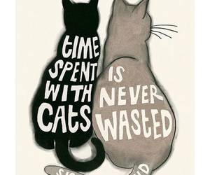 cat, quotes, and illustration image