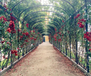 roses, vienna, and wien image