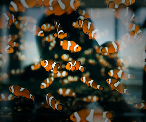 fish, nemo, and animal image
