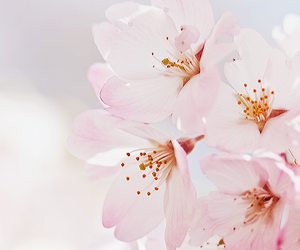 flowers, spring, and blossom image