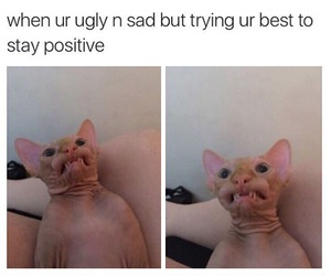 cat, funny, and tumblr image