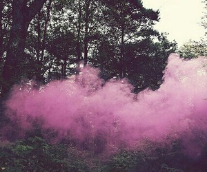 pink, forest, and grunge image