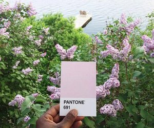 pantone, flowers, and nature image