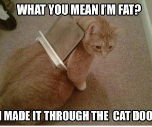 funny, cat, and fat image