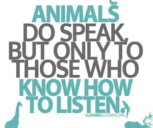 animal rights, animals, and listen image