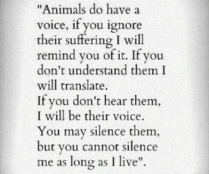 animal rights, quotes, and truth image