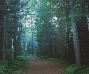 landscape, 35mm, and forest image