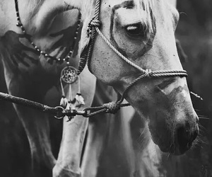 horse, indian, and white image