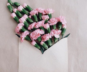 flowers, pink, and envelope image