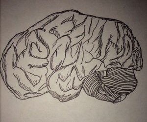 brain, derek, and desenho image