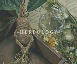 harry potter, herbology, and hogwarts image