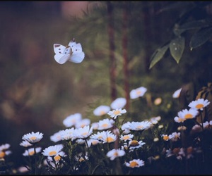 butterfly, flowers, and daisy image