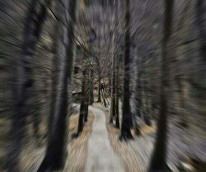 camino, wallpaper, and bosques image