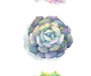 pink, rosa, and verde image