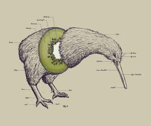 kiwi, bird, and fruit image