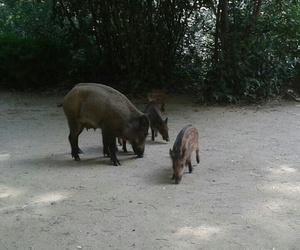 tiere and wildschweine image