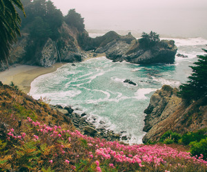 amazing, flowers, and rocks image
