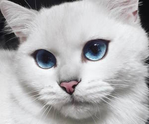 cat, cute, and blue image