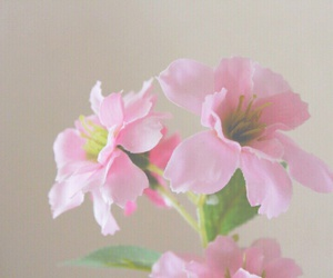 flowers, flower, and pink image
