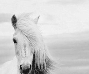 caballo, lindo, and fondo image