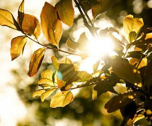 leaves and nature image