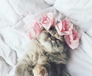 flowers and cutecat image