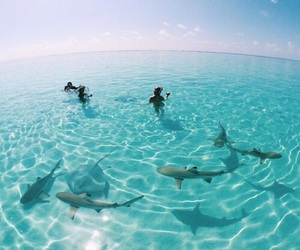 dolphins, inspo, and paradise image