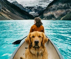 dog, travel, and nature image