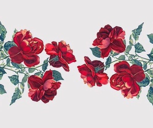 love+, red, and roses image