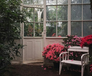 flowers, greenhouse, and rose image