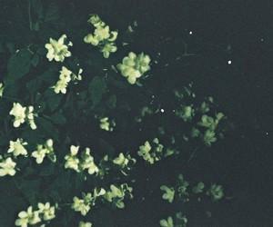 flowers, ночь, and night image