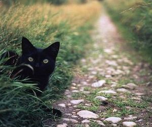 cat, nature, and black image