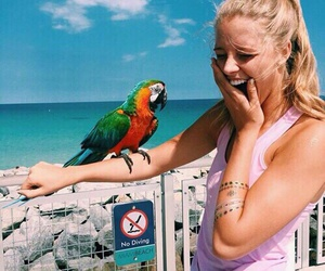summer, beach, and parrot image