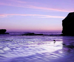 purple and beach image
