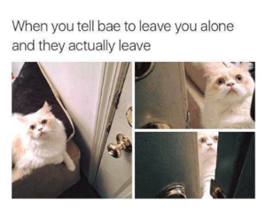 funny, cat, and bae image