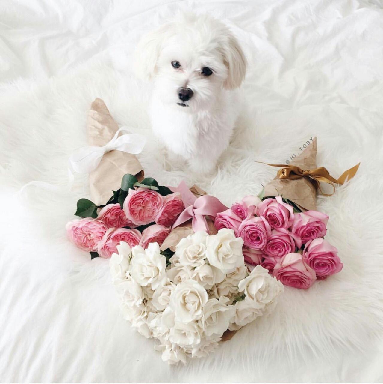 Фото щенка с розой