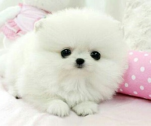 cute, puppy, and white image