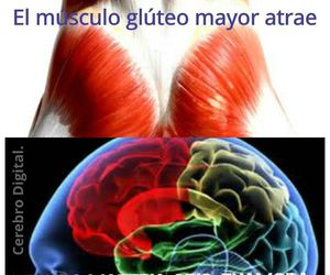anatomy, funy, and brain image