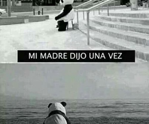 alone, frases, and panda image