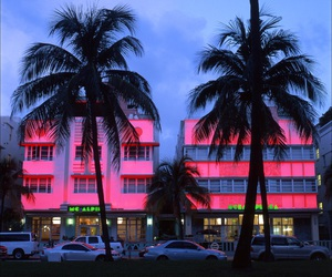 pink, city, and palms image