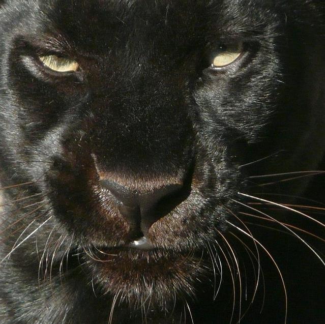 animal, black, and theme image