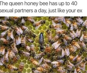 animal, love, and bee image
