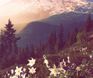flowers, mountain, and sun image