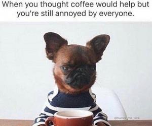 funny, coffee, and dog image