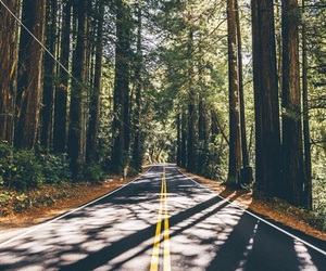nature, green, and road image