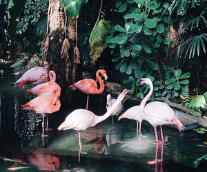 flamingo, nature, and pink image