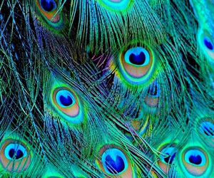 beautiful, close up, and colorful image