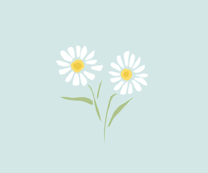 daisy, flower, and background image
