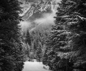 winter, nature, and forest image