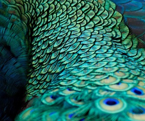 bird, close up, and feathers image